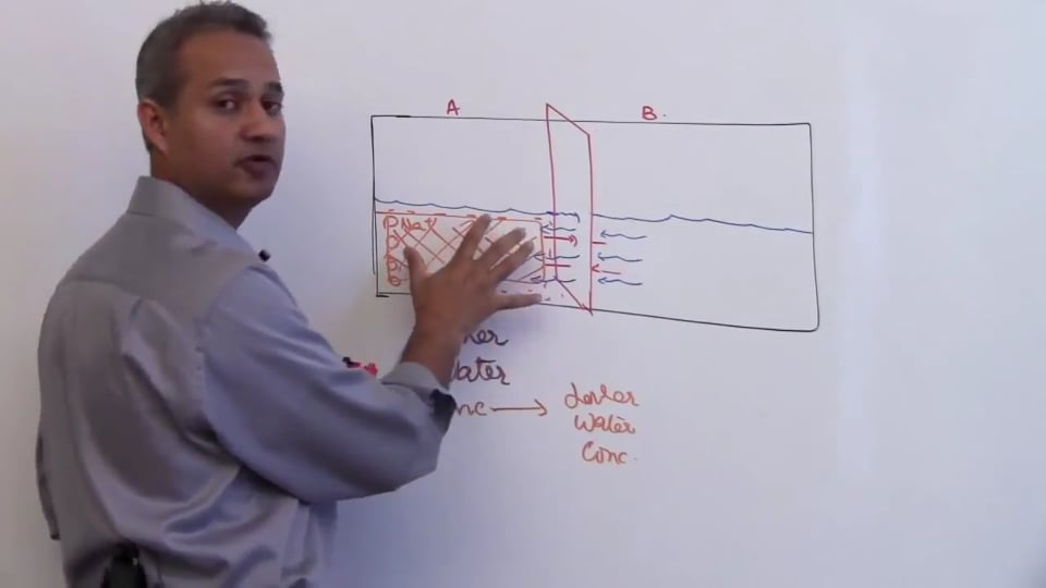 Fourth Session-Renal Physiology: (part 1)