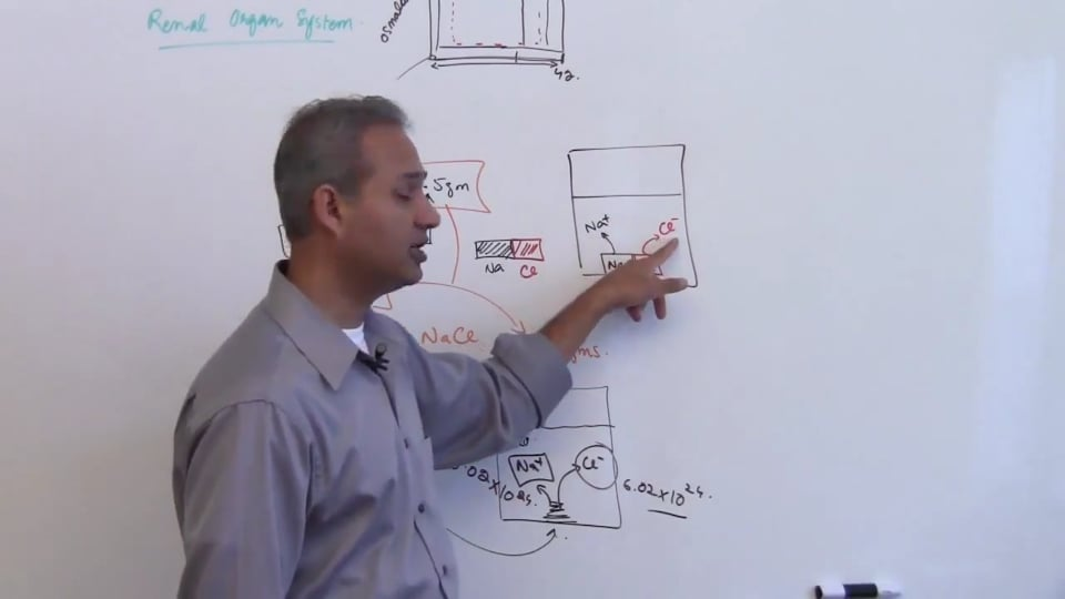 Fourth Session-Renal Physiology: (part 3)