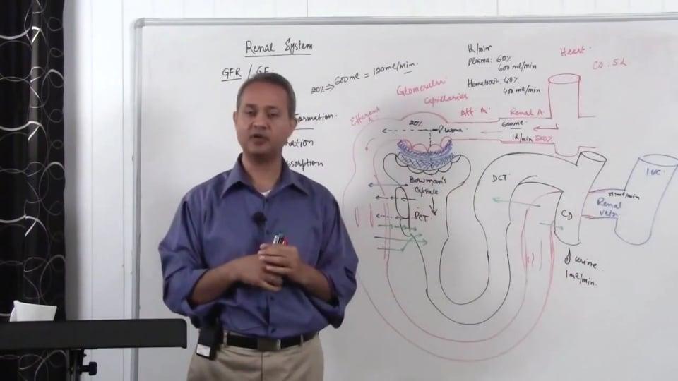 Renal System Fundamentals: Glomerular Filtration Rate (GFR) (part 3)