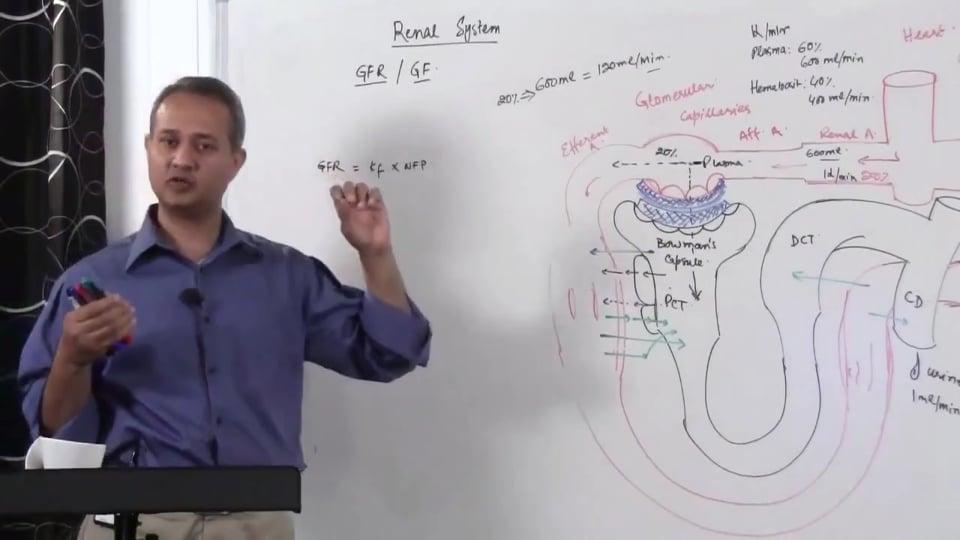 Renal System Fundamentals: Glomerular Filtration Rate (GFR) (part 6)