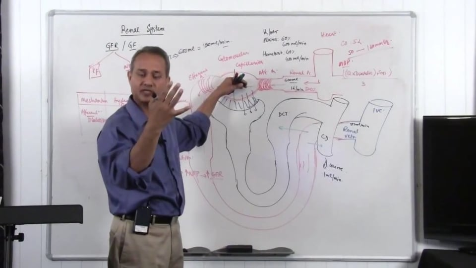 Renal System Fundamentals: Glomerular Filtration Rate (GFR) (part 9)