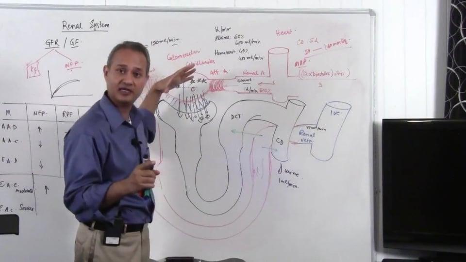Renal System Fundamentals: Glomerular Filtration Rate (GFR) (part 10)