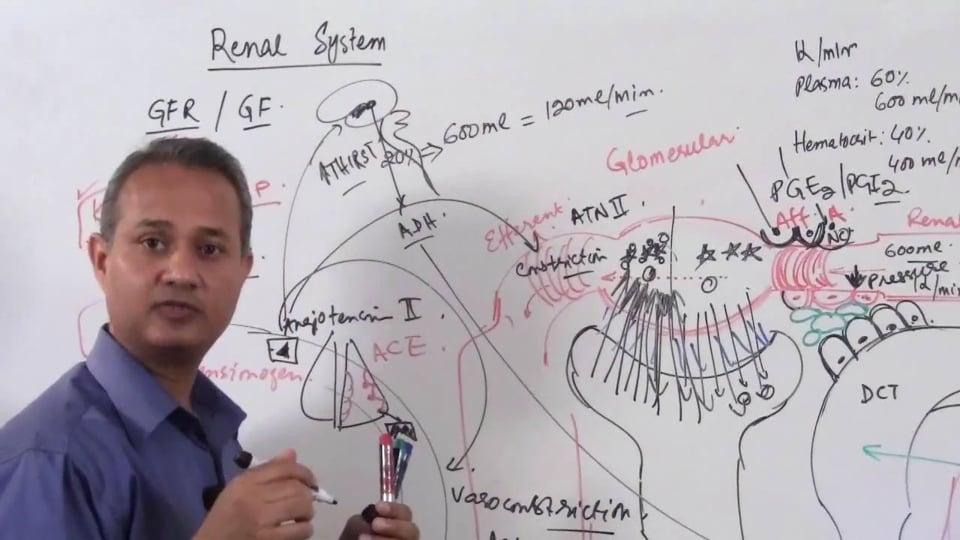 Renal System Fundamentals: Glomerular Filtration Rate (GFR) (part 12)
