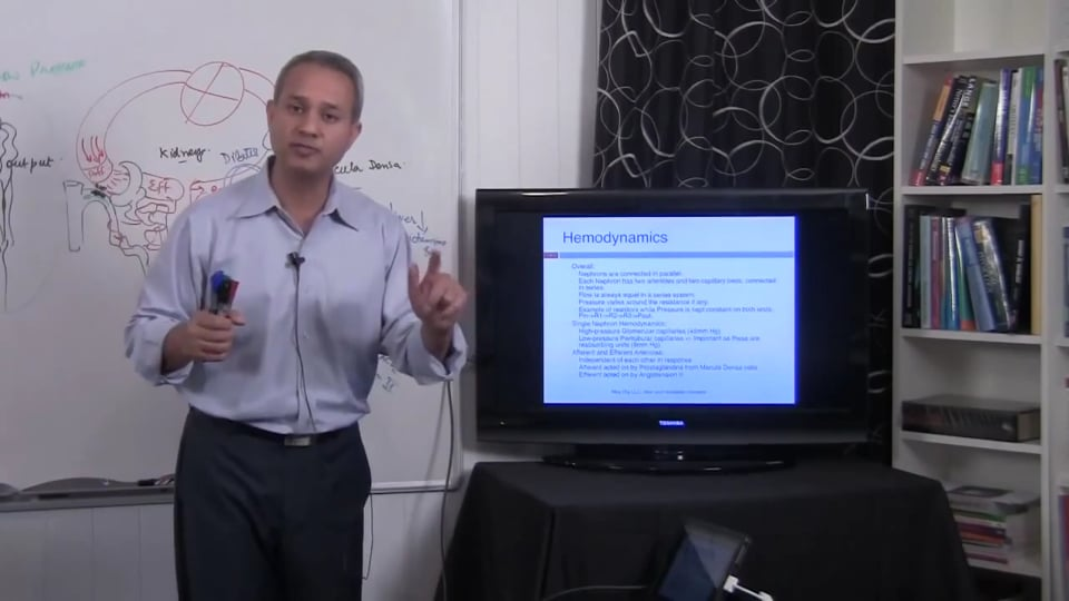 Second Session Renal System Fundamentals: (part 3)