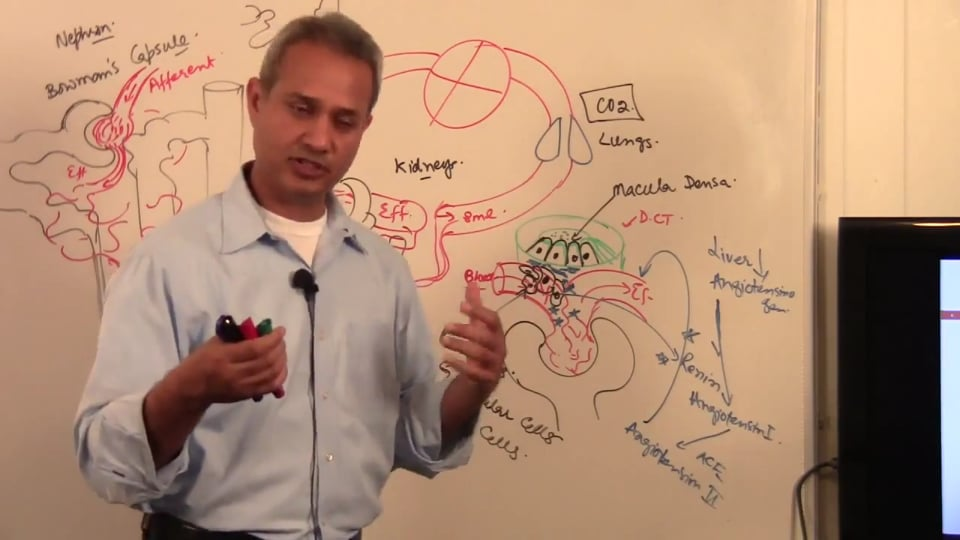 Third Session Renal System Fundamentals: (part 4)