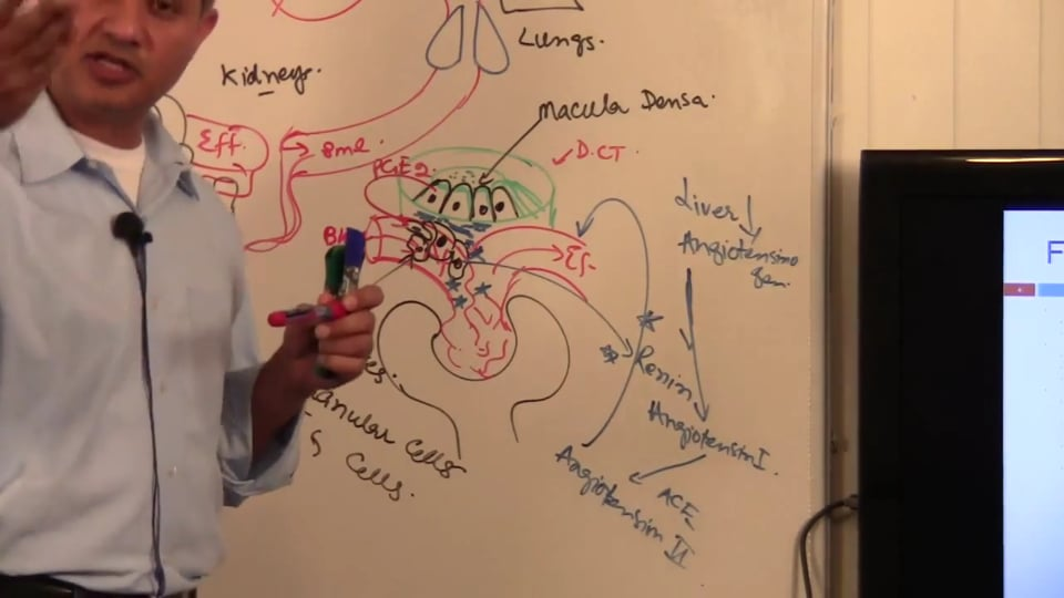 Third Session Renal System Fundamentals: (part 5)
