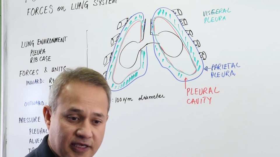 Forces on the Lung System