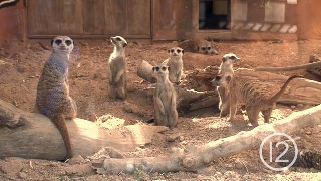 New Mob at Reid Park Zoo
