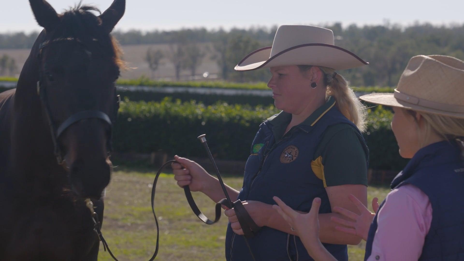 Breeding Champion Horses