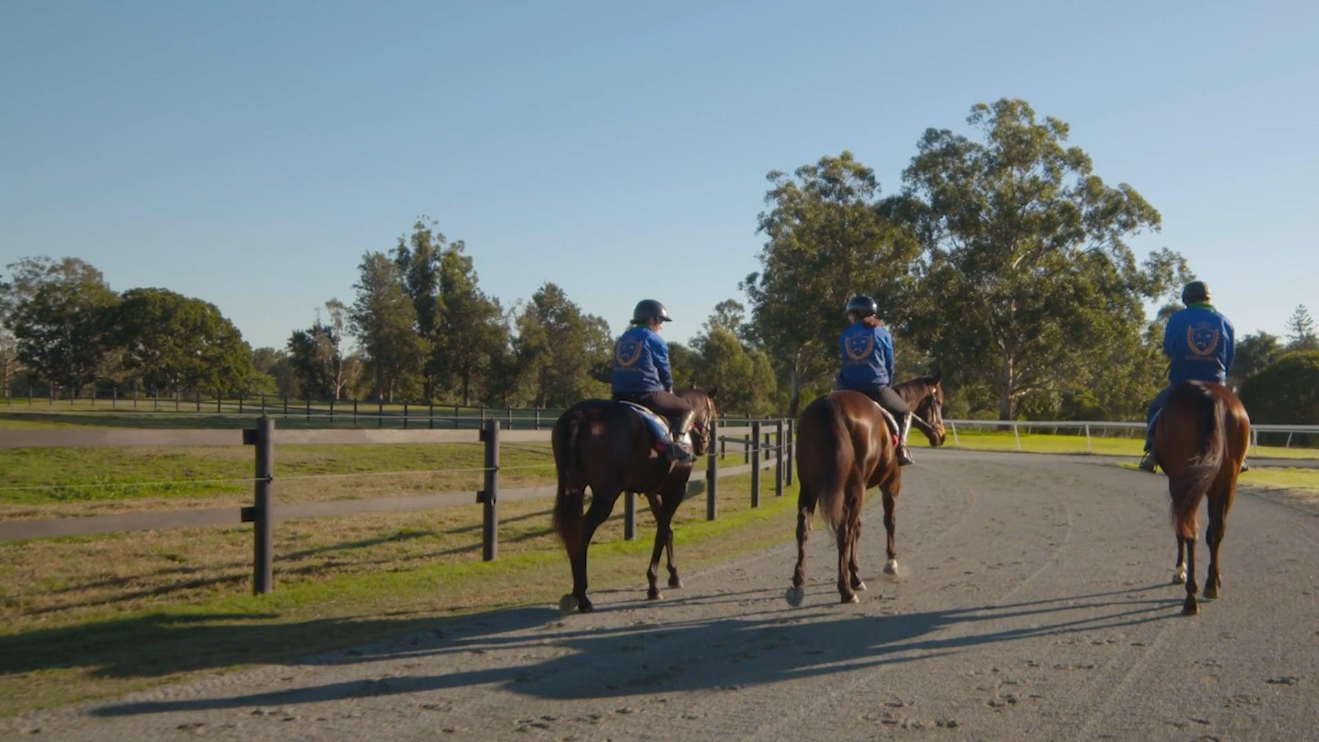 Horse Training & Handling