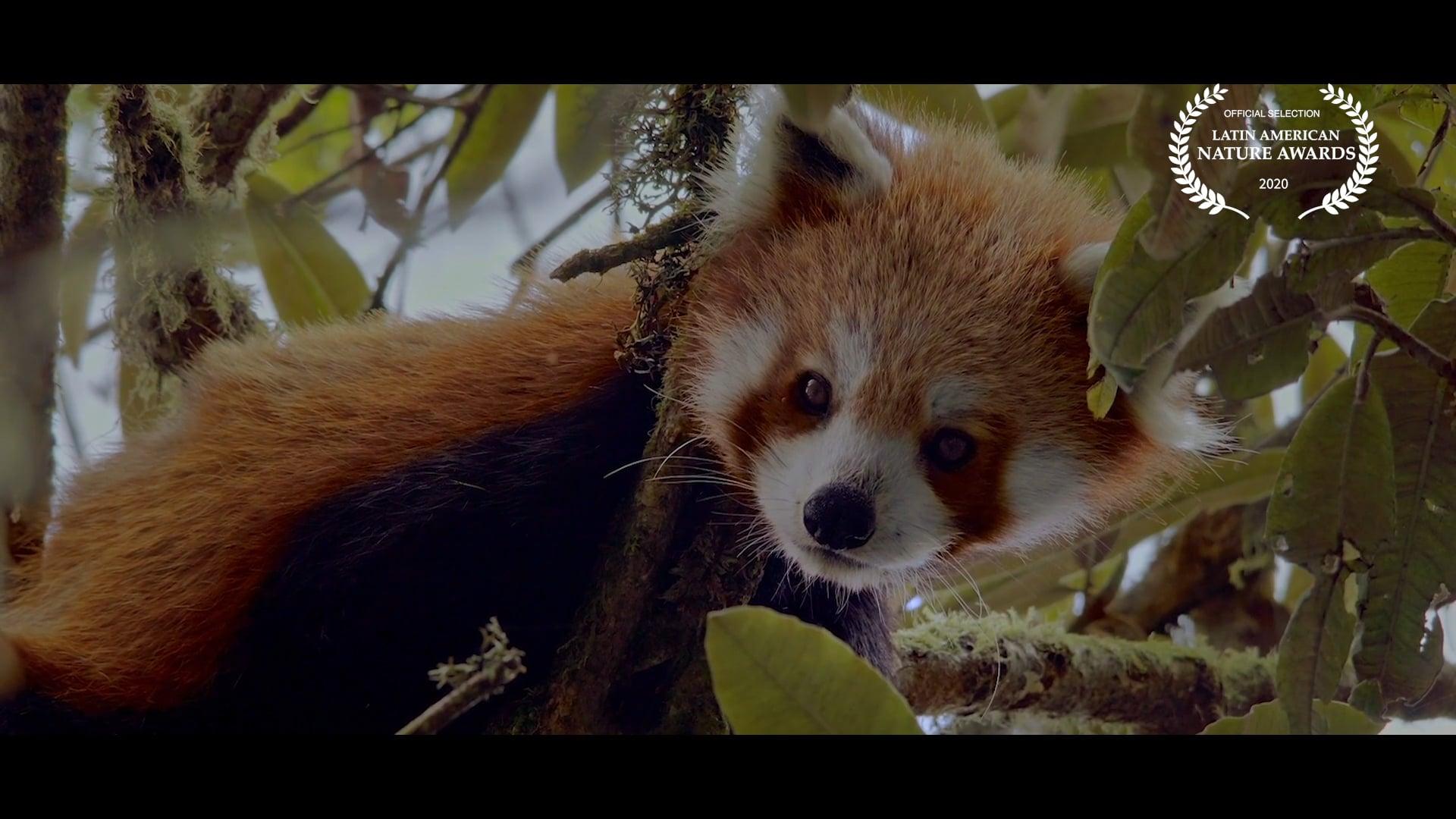 The Firefox Guardian
