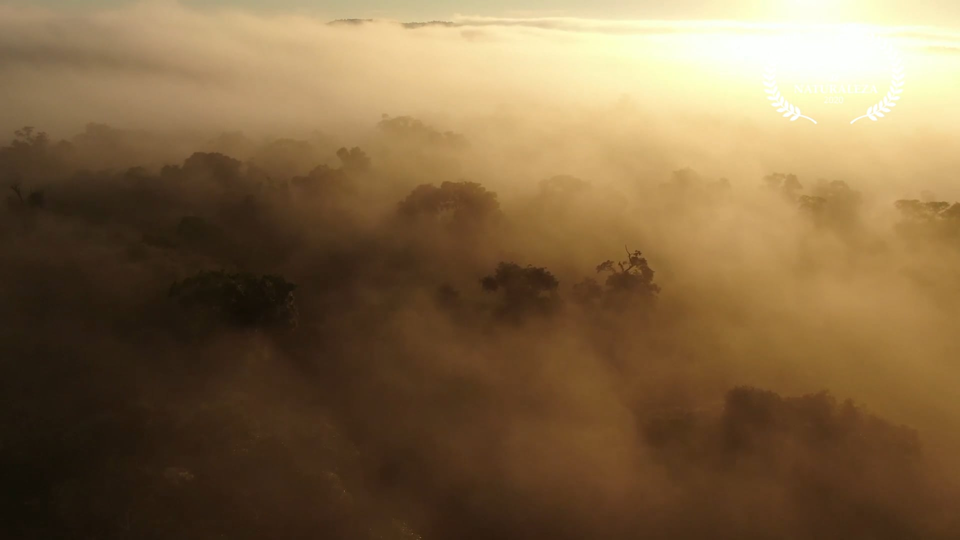 Forest of Misiones: The Wonder From the Air