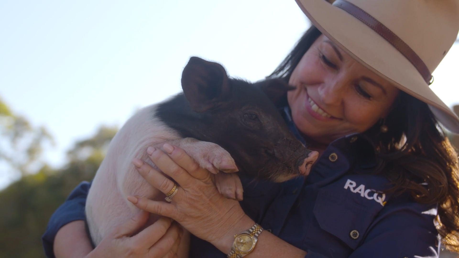 Meet a Piglet