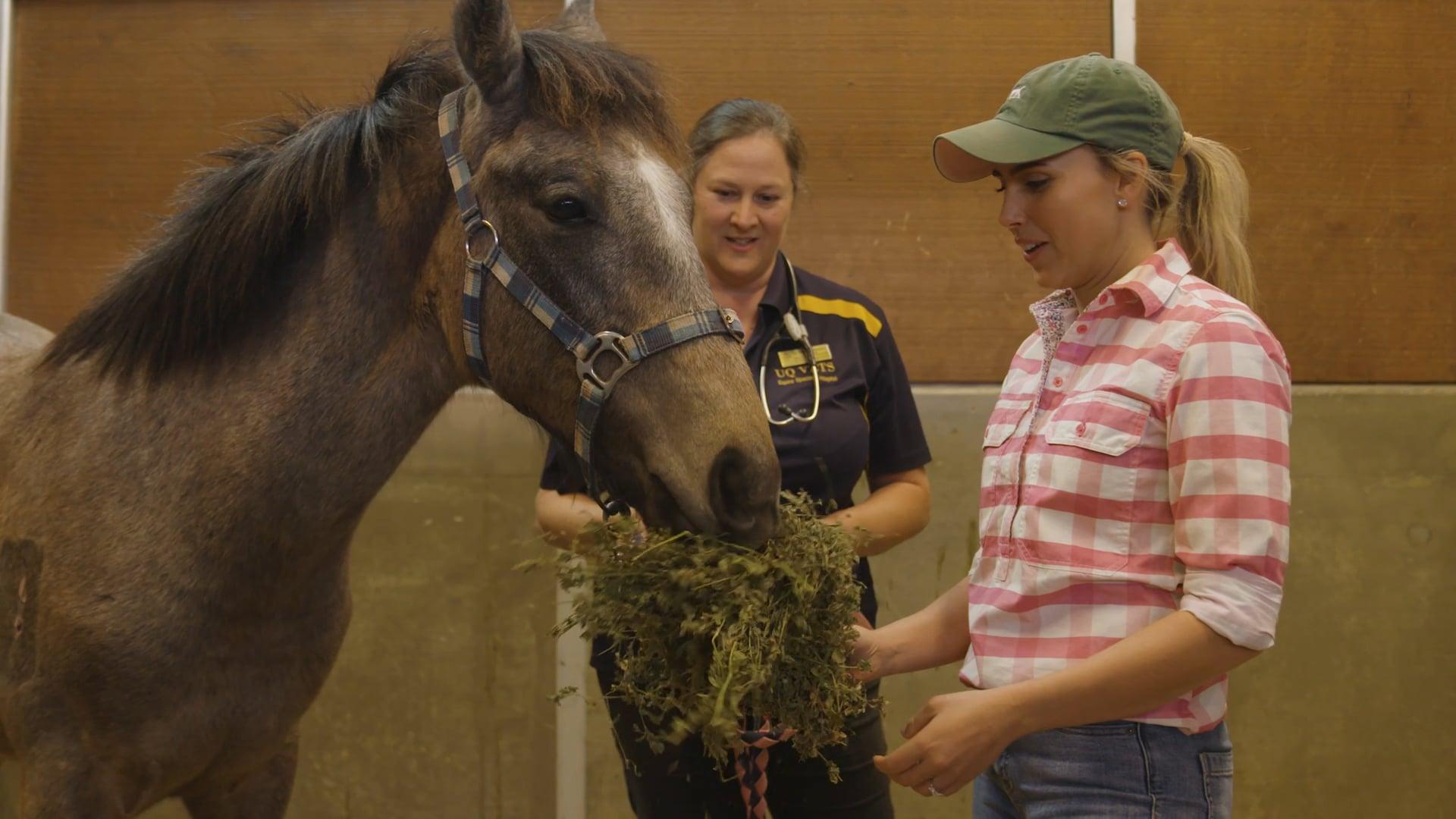 Horse Care & Health