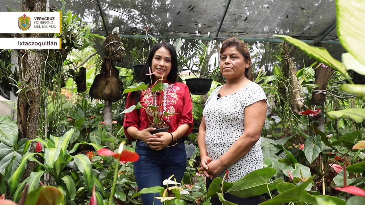 Orgullo Veracruzano: Ixtaczoquitlán