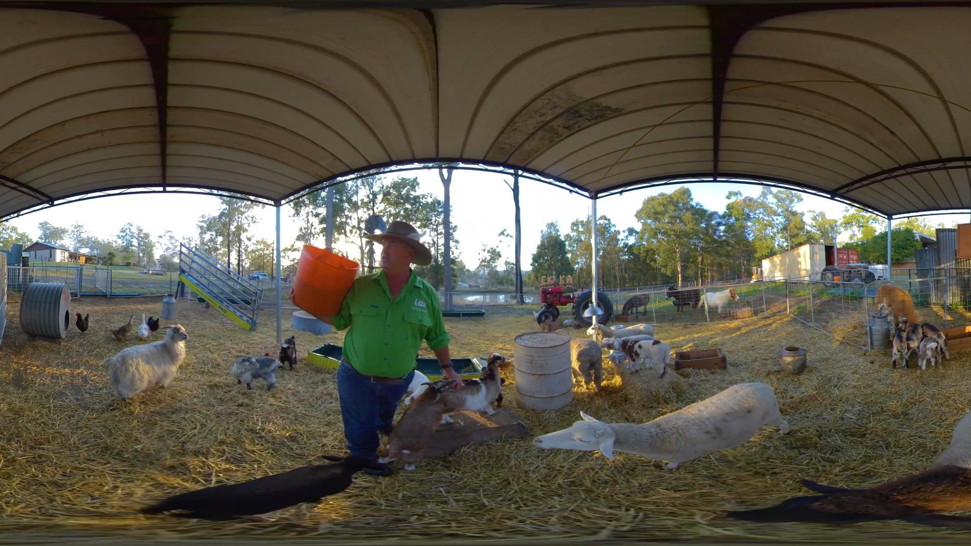 Day 10 | 360 Animal Nursery