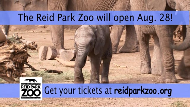 Reid Park Zoo Makes Plans to Reopen