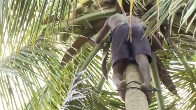 001 - Aan de vrucht herken je de boom