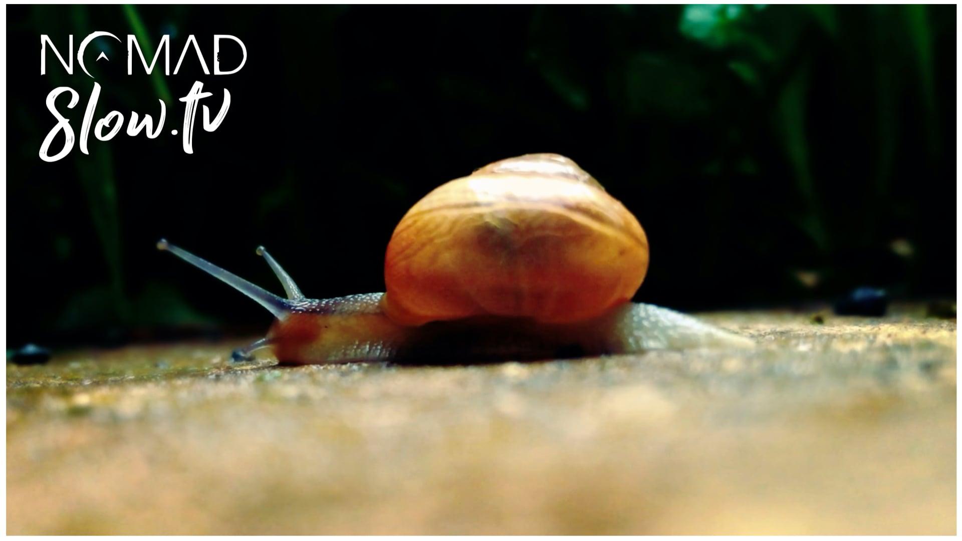 Even a snail will eventually reach its destination