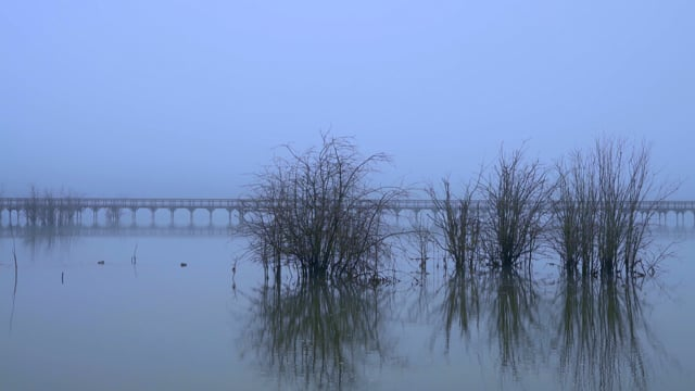 Calm Foggy Pond