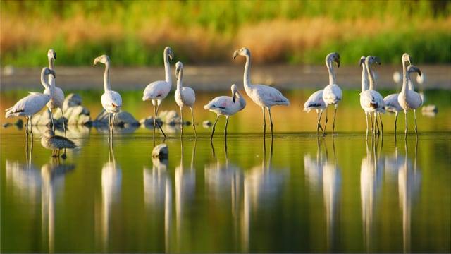 African Birds of Vermont Salt Pan, Western Cape