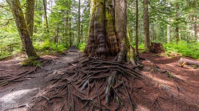 Frankln Falls Trail - Virtual Forest Walk
