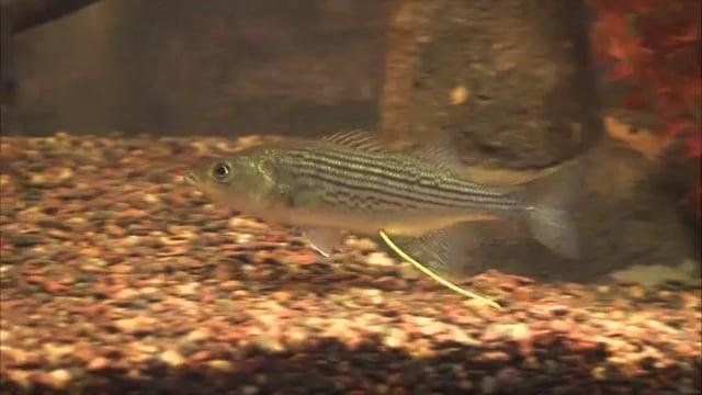 Edenton Fish Hatchery