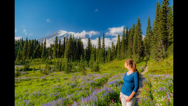 Relaxing Summer Walk through Paradise Area of Mt. Rainier National Park (with Music)