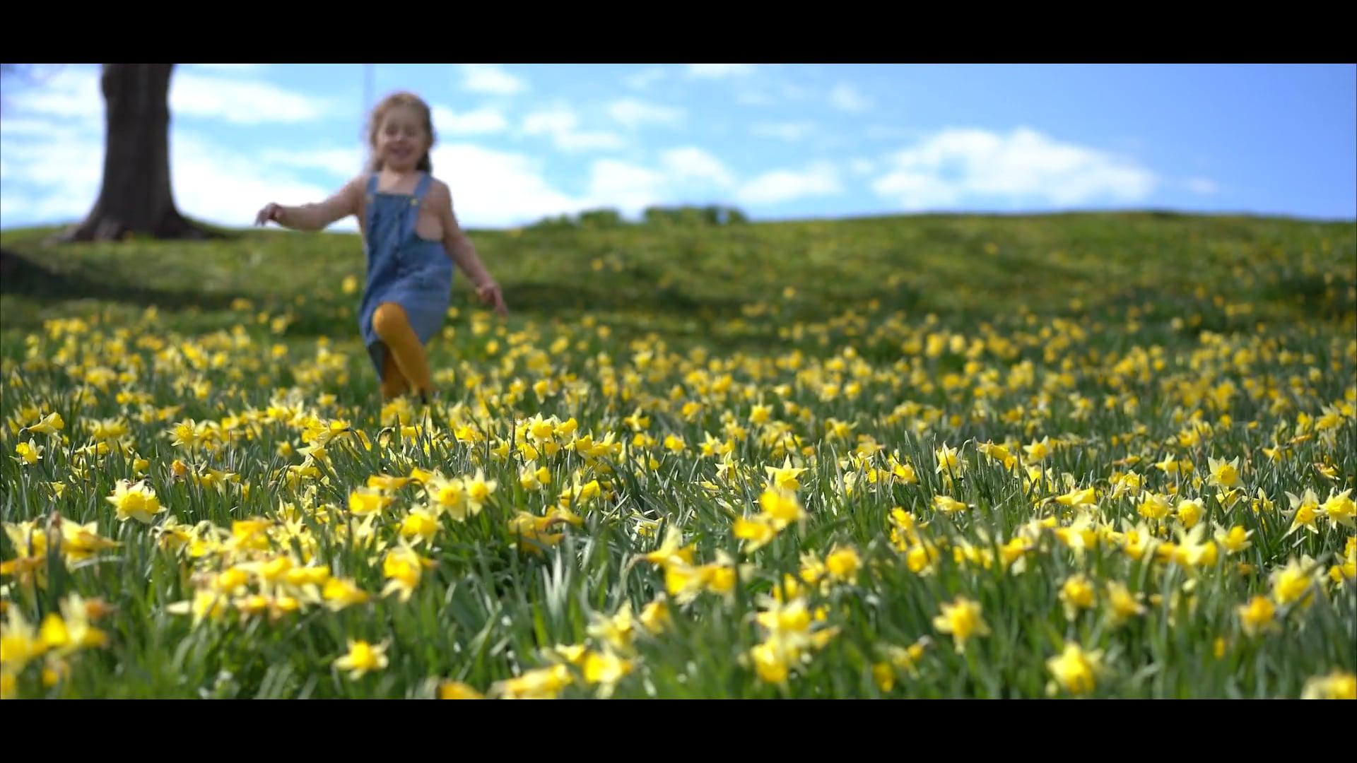 The daffodil field on Aukra
