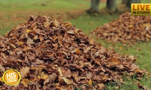 Favorite Fall activities? Raking leaves, jumping in leaves? What is it for you?