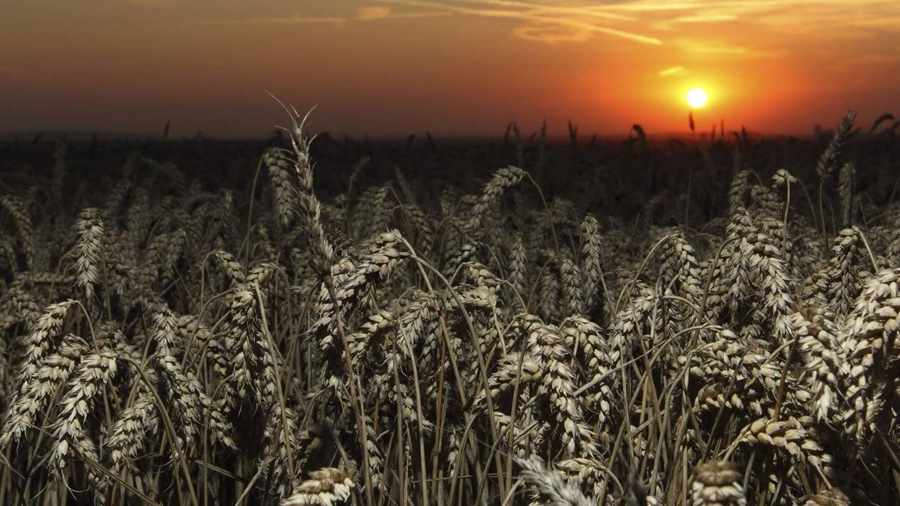 L'agriculture et l'agoalimentaire se relancent après la crise du coronavirus.