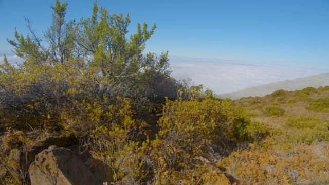 Incredible Landscapes of Maui Island, Hawaii - Haleakala National Park - Short Relax Video