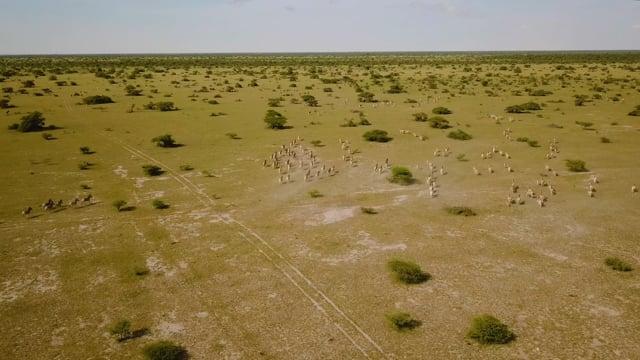 Wild Botswana in 4K - Incredible Aerial Footage of African Wildlife