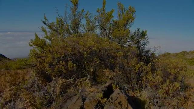 Incredible Landscapes of Maui Island, Hawaii - Haleakala National Park - 4K HDR