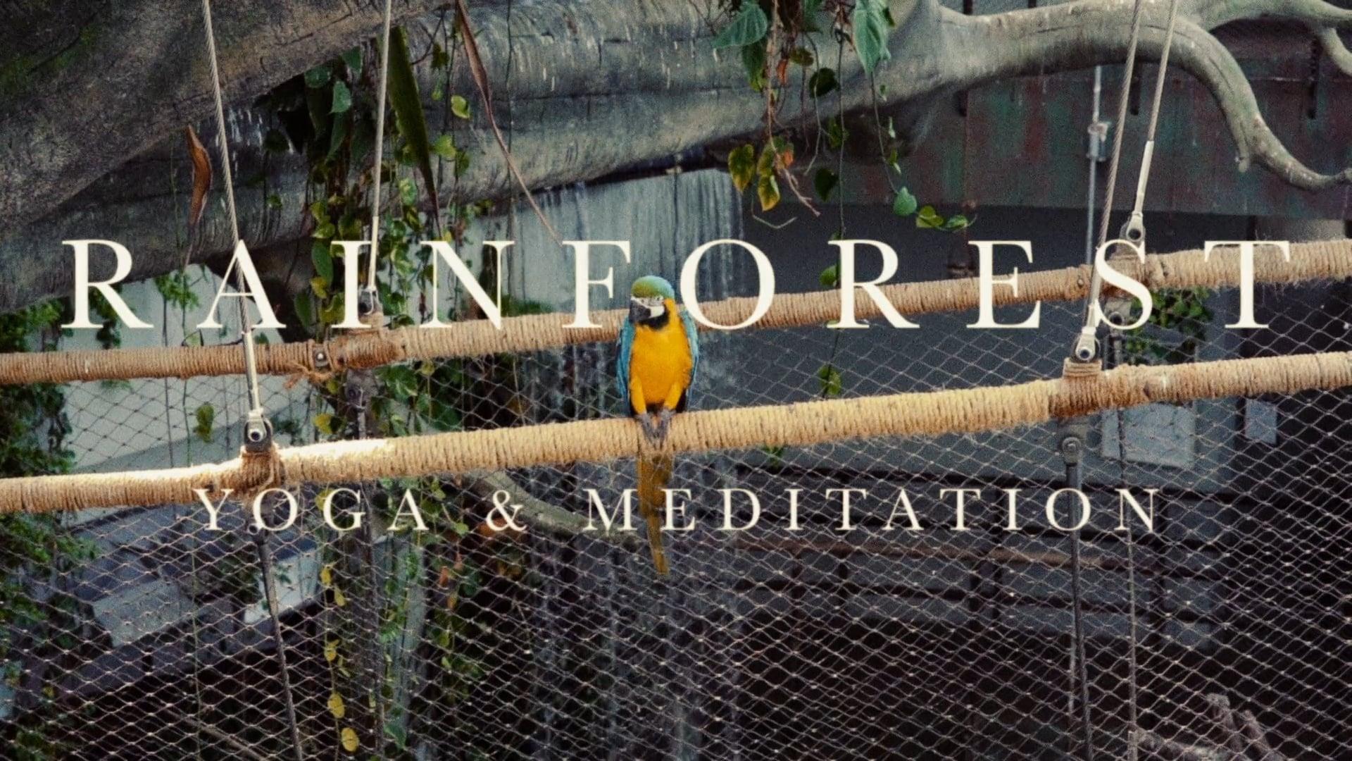 Rainforest Yoga & Meditation