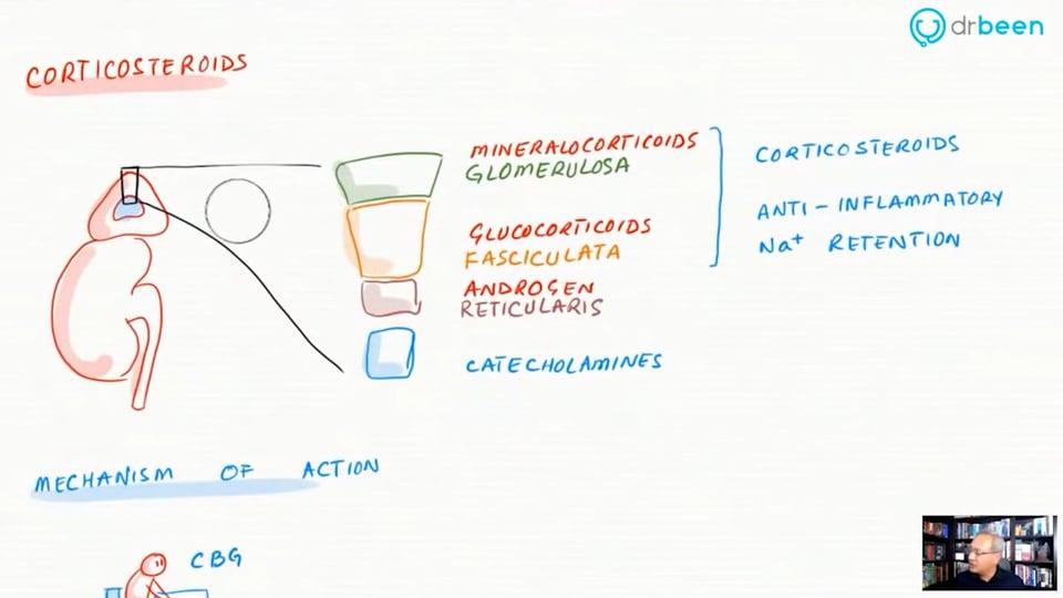 Inhaled Corticosteroids (Budesonide)