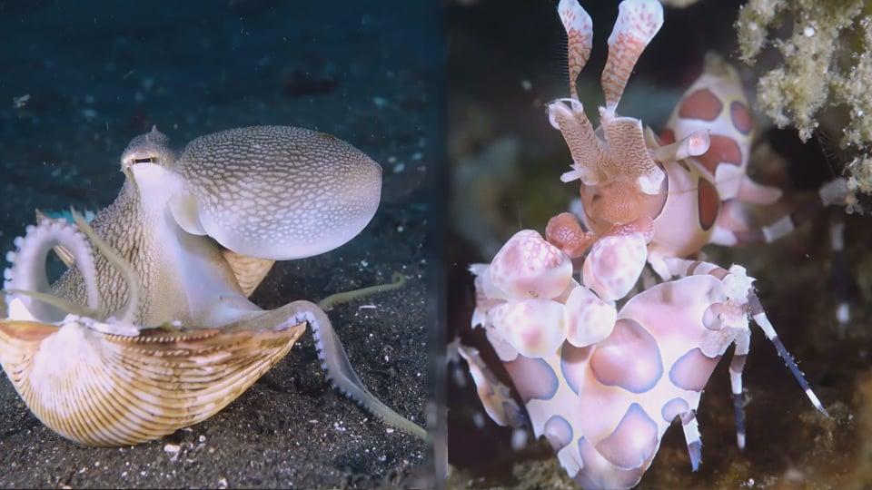 Molluscs and Crawlies