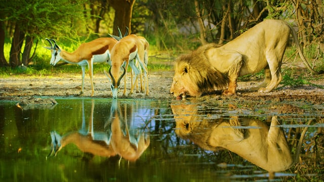 Botswana 2020 - Wildlife Documentary Film in HDR