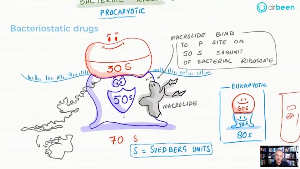 Macrolide - Azithromycin