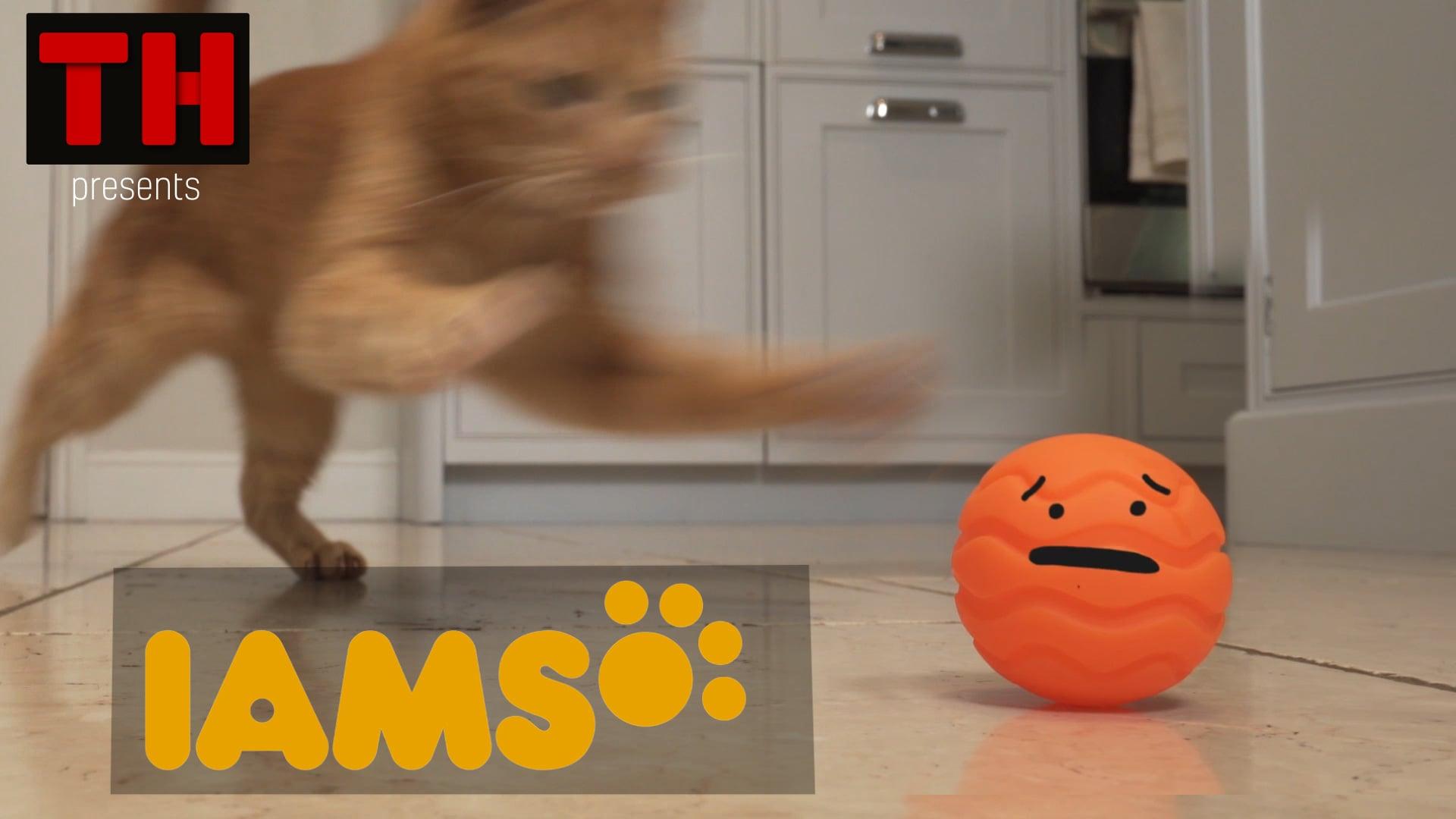IAMS TV Spot- Temperament 15sec Clean
