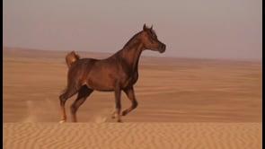 PRINCE DU DESERT