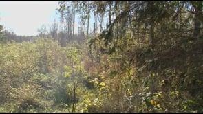 Grandes chasses en Bielorussie