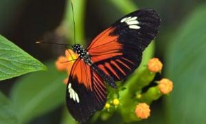 Ian is afraid of...butterflies.