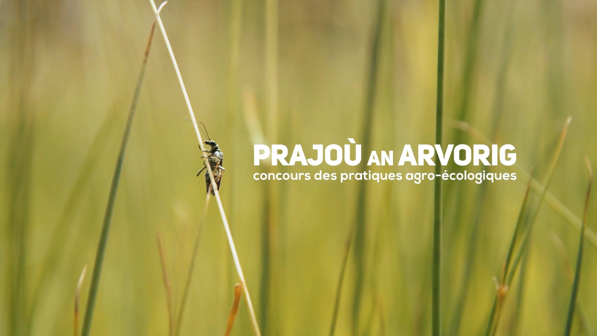 Prajoù an Arvorig