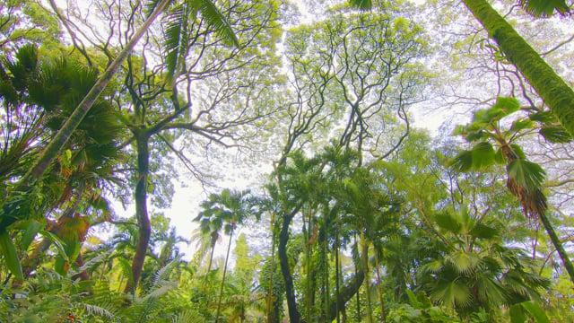 Sounds of Jungle. Part 2 - 4K Nature Soundscape Video