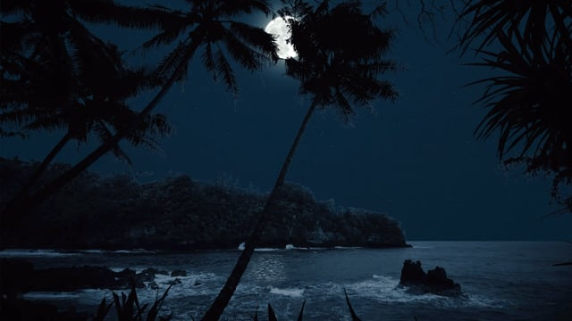 Night in Tropical Paradise - 4K Nature Relax Video