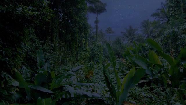 Jungle Nightlife Sounds. Part 1 - 4K HDR Soundscape Video