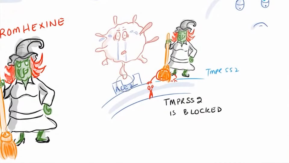 Bromhexine Study, SARS-COV-2 Antibody Cocktail