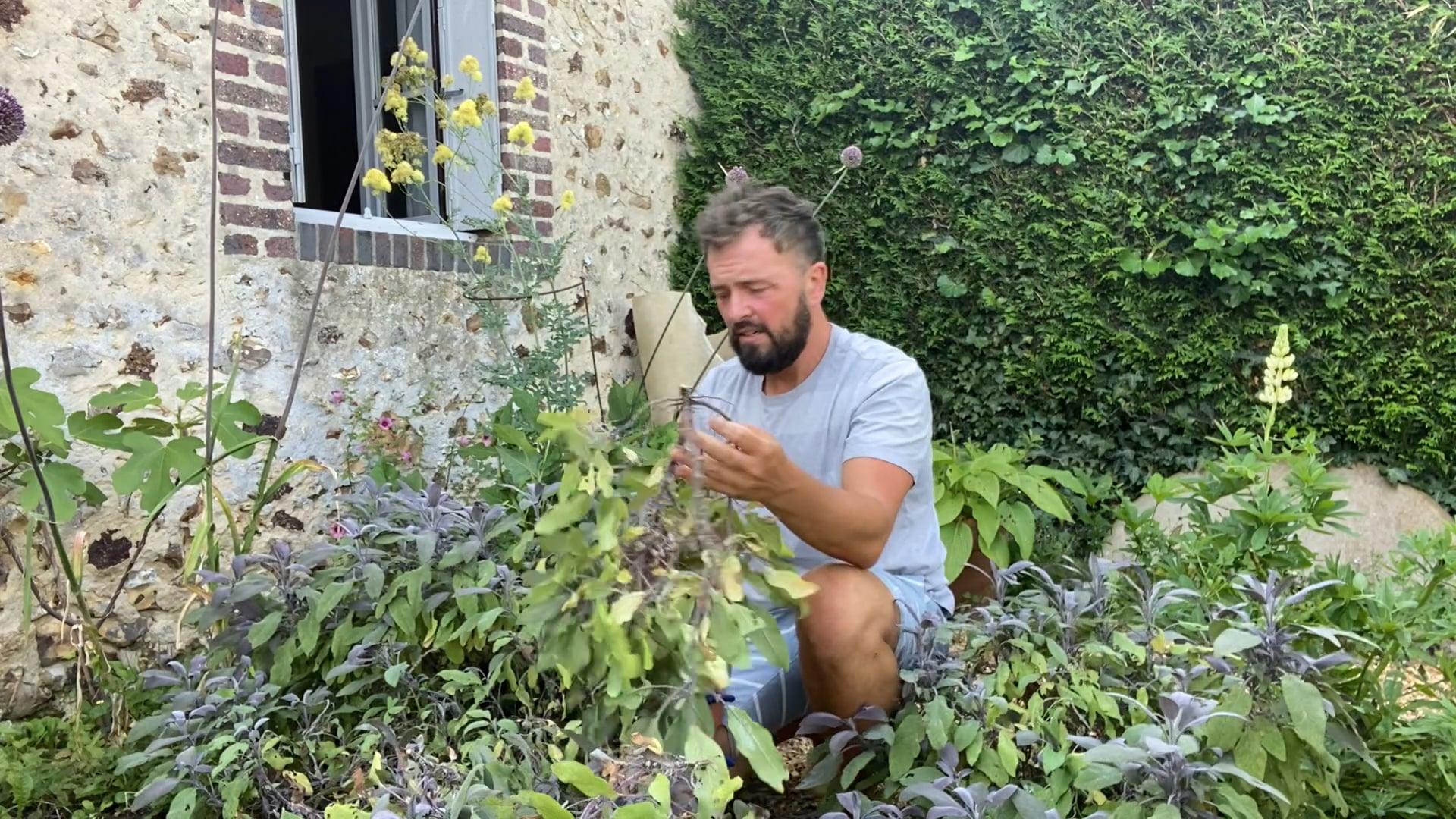 Midsummer Cutting Back Herbs | July 2020