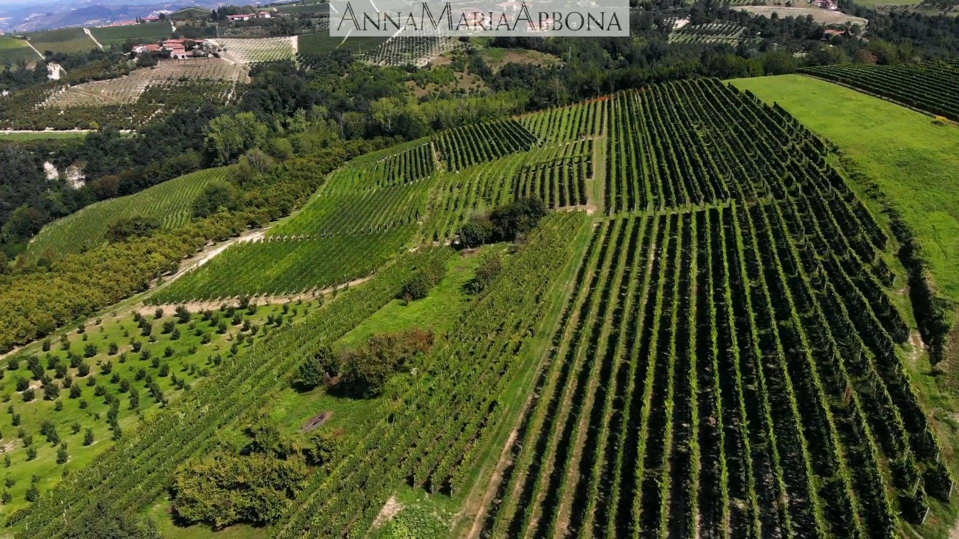 Anna Maria Abbona | Il vigneto di Farigliano | The Farigliano vineyard